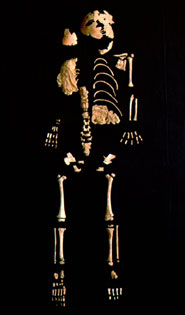 The Lagar Velho skeleton