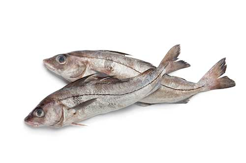 Image of some haddock