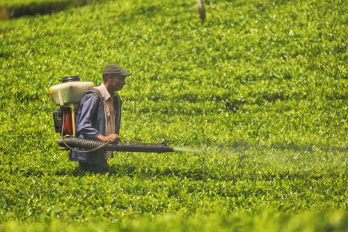 Generic image of a farmer in Sri Lanka spraying crops with pesticide
