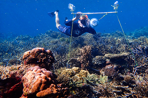 Sounds of Healthy Coral Reefs Might Help Endangered Corals