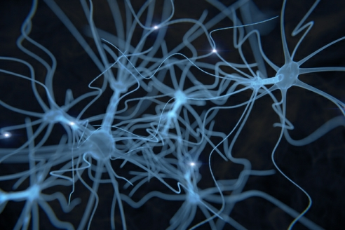 generic image of cell network in brain